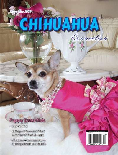 Chihuahua Connection Magazine Subscription