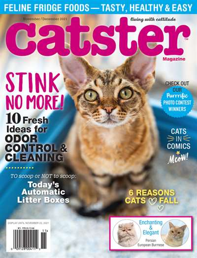 Catster Magazine Subscription Canada