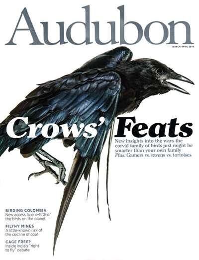 Audubon Magazine Subscription Canada